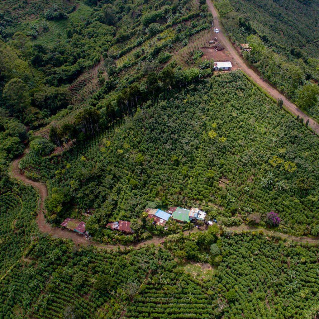 Coffee plantation Costa Rica HB