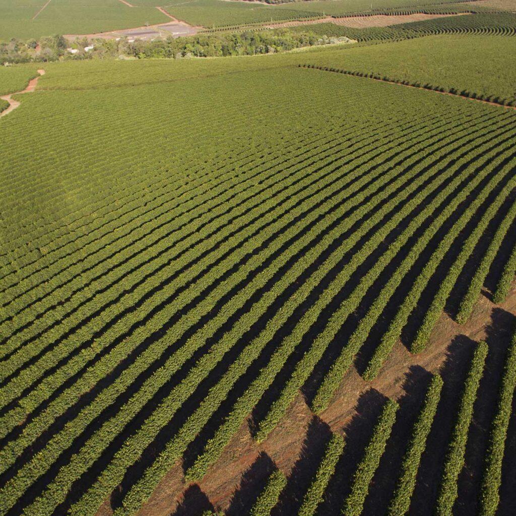 Minas Gerais Kaffeeplantage