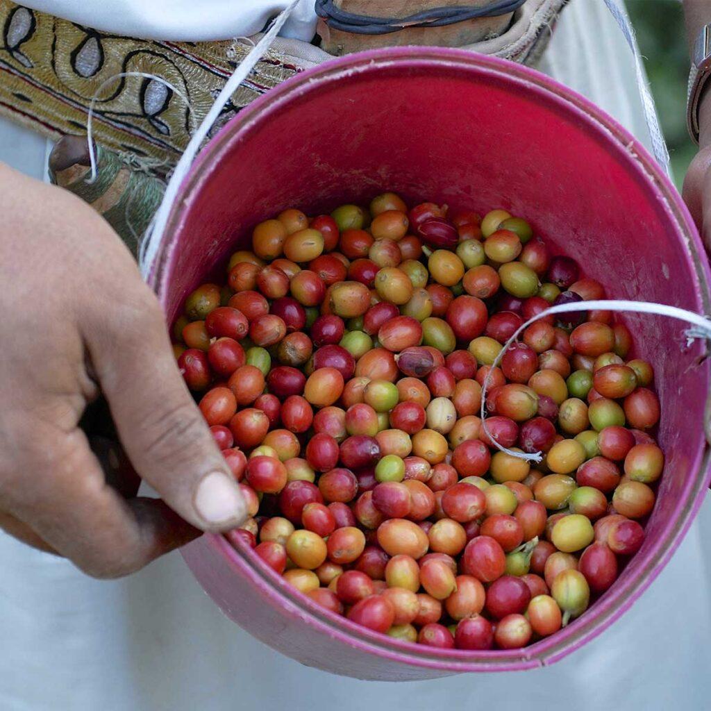 是誰?引領咖啡進入歐洲大陸?