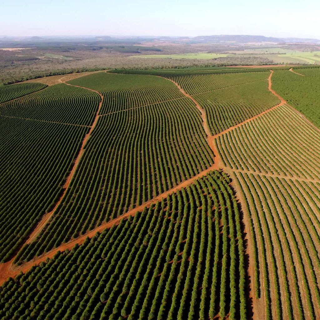 intensive coffee cultivation in Brazil